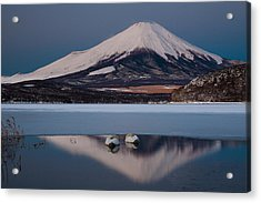 A Pair Of Mute Swans In Lake Kawaguchi In The Reflection Of Mt Fuji, Japan Acrylic Print by Mint Images/ Art Wolfe