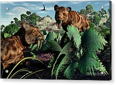 A Pair Of Sabre-toothed Tigers Acrylic Print by Mark Stevenson