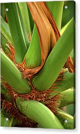 Acrylic Print featuring the photograph A Palmetto's Elbows by JD Grimes
