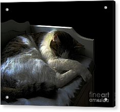Acrylic Print featuring the photograph A Patch Of Sun by Dale   Ford
