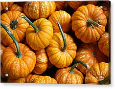 A Peck Of Pumpkins Acrylic Print by Kami McKeon