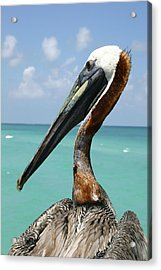 A Personable Pelican Portrait Acrylic Print by Stephen St. John