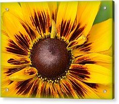 A Pocket Full Of Sunshine... Acrylic Print