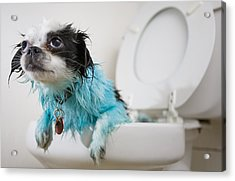 A Puppys Mistake Acrylic Print by Mike Raabe