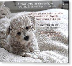 A Puppy's Prayer Acrylic Print