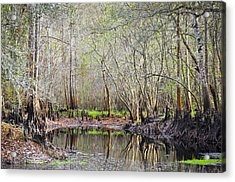 A Quiet Back Woods Place Acrylic Print by Carolyn Marshall