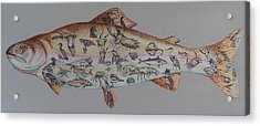 A Rainbow Trout Acrylic Print by Burland Murphy