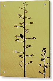 A Raven's Rest Acrylic Print by James Mancini Heath