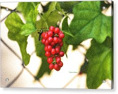 Acrylic Print featuring the photograph A Red Cluster by Joan Bertucci