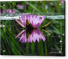 A Reflection Of A Fuchsia Water Lily Acrylic Print