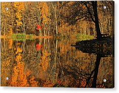 A Reflection Of October Acrylic Print by Karol Livote