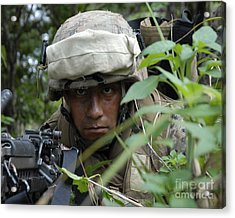 A Rifleman Conceals Himself Acrylic Print by Stocktrek Images