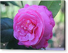 A Rose By Anyother Color Acrylic Print