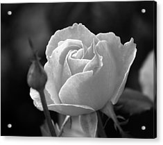 A Rose In Black And White Acrylic Print by Janice Adomeit