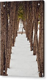 A Row Of Trees Outside In The Snow During Winter. Acrylic Print by Adam Hester