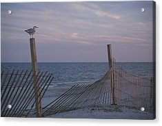 A Seagull Pauses Acrylic Print by Stacy Gold