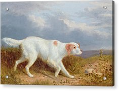 A Setter On The Moor Acrylic Print by Philip Reinagle