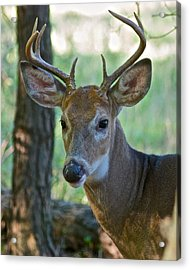 A Seven Point Profile 9752 Acrylic Print by Michael Peychich