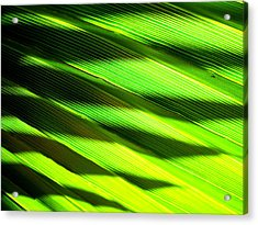 A Shadow Of A Palmfrond On A Palmfrond Acrylic Print by Catherine Natalia  Roche