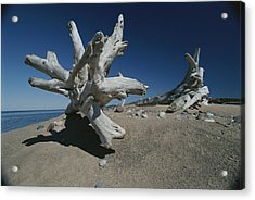 A Shot Of Some Driftwood On A Beach Acrylic Print by Raymond Gehman