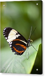 A Side View Of A Butterfly Acrylic Print by Taylor S. Kennedy