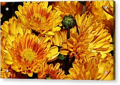 A Sign Of Fall Acrylic Print by Bruce Bley