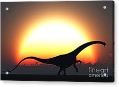 A Silhouetted Diplodocus Dinosaur Takes Acrylic Print by Mark Stevenson