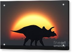A Silhouetted Triceratops Strolling Acrylic Print
