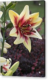 A Single Bloom Acrylic Print by Mike Lytle