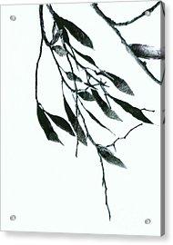 A Single Branch Acrylic Print by Ann Powell