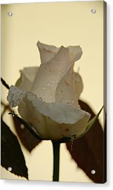 A Single White Rose Acrylic Print