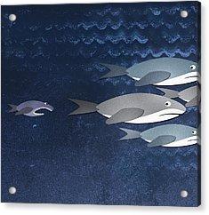 A Small Fish Chasing Three Sharks Acrylic Print by Jutta Kuss