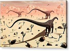 A Small Group Of Diplodocus Sauropod Acrylic Print by Mark Stevenson