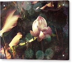 A Soft Touch Acrylic Print