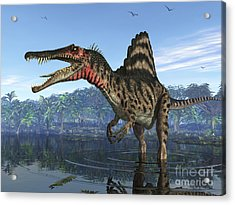 A Spinosaurus Searches For Its Next Acrylic Print by Walter Myers