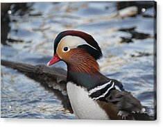 Acrylic Print featuring the photograph A Splash Of Mandarin by Amy Gallagher