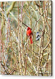 A Spot Of Red Acrylic Print by Lorraine Louwerse
