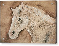 A Stallion Acrylic Print by Remy Francis