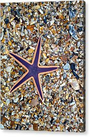 A Star Among Us Acrylic Print