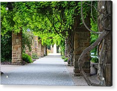 Acrylic Print featuring the photograph A Stroll Under The Vines by Lynnette Johns