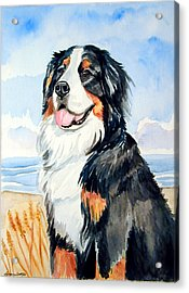 A Summer Day - Bernese Mountain Dog Acrylic Print