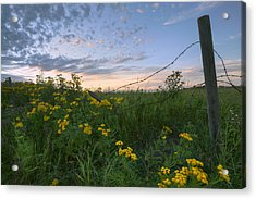A Summer Evening Sky With Yellow Tansy Acrylic Print by Dan Jurak