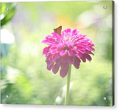 A Summer's Song Acrylic Print by Amy Tyler
