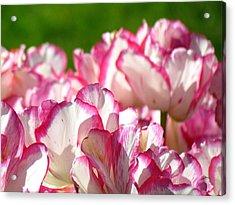 A Thousand Petals Acrylic Print