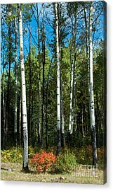 A Touch Of Autumn Acrylic Print by Bob and Nancy Kendrick
