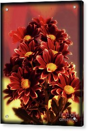 A Touch Of Crimson Acrylic Print