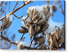 A Touch Of Winter Acrylic Print