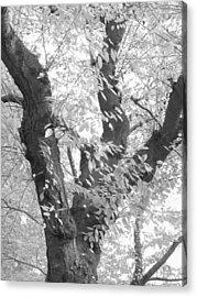 A Tree For All Seasons Acrylic Print