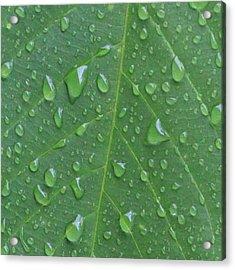 A Tree Leaf Under The Rain, By My Lens Acrylic Print