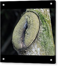 A Tree Log After Years Of Being Cut Acrylic Print